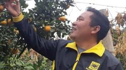 Chùm ảnh: Mê mẩn gống quýt đường ngọt thơm khác biệt ở Vân Hồ