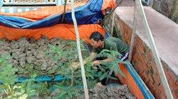 Hết lũ, bắt lươn đồng nuôi trong bồn, bán 160-180.000 đồng/ký