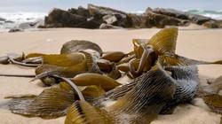 """Úc nóng kỷ lục, nước biến thành """"nồi lẩu"""" nấu chín sinh vật"""