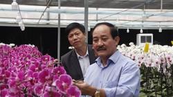Không ngờ đây là nơi đầu tiên trồng hoa lan hồ điệp ở Quảng Trị