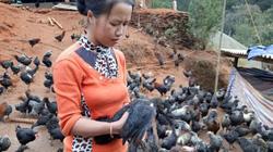 Thoát nghèo, vươn lên khá giàu nhờ vay vốn ưu đãi nuôi gà đen