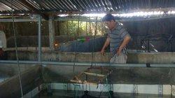 Làm 8 bể xi măng nuôi lươn không bùn, cứ bán 1 lứa lời hơn 30 triệu