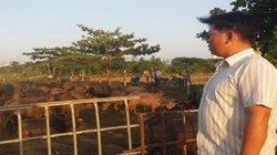 """Ông tỷ phú """"du mục"""" chăn đàn trâu hơn 200 con ở tỉnh Phú Yên"""