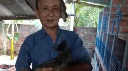 Nuôi loài cầy vòi hiền như mèo, bán 1 con giống đã có 2 triệu đồng