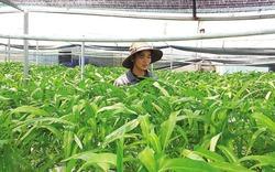 9X xứ Quảng xuất ngoại sang Thái học trồng rau sạch