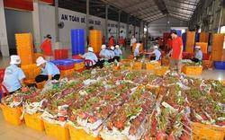 Thanh long: Chiến lược nào nâng tầm nông sản Việt?