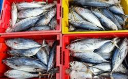 Ngư dân Bình Định lỗ cả 100 triệu đồng do phải tránh bão lâu ngày
