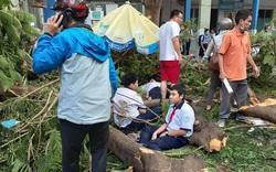 Học sinh tử vong do cây đổ thuộc hộ cận nghèo