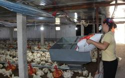 Giá gia cầm hôm nay 25/6: Giá gà thịt công nghiệp quay đầu giảm, người nuôi lo lắng
