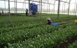 Tránh nắng nóng siêu giỏi, nông dân Thường Tín thắng lớn vụ rau