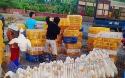 Giá gia cầm hôm nay 28/6: Vịt thịt bán giá cao, gà thả vườn dễ bán
