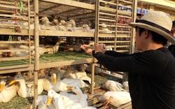Giá gia cầm hôm nay 29/6: Giá gà thịt công nghiệp giảm, vịt về chợ Hà Vỹ còn 10 tấn/ngày