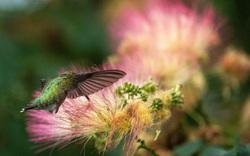 Chim ruồi hút mật và những hình ảnh ấn tượng về động vật tuần qua