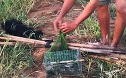 Phú Yên: Chủ tịch Hội Yến sào nói gì trước nạn bắt chim tiền tỷ ăn thịt?