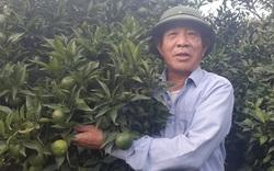 Vựa hoa quả Sơn La sẵn sàng cung ứng hàng cho nhà máy chế biến