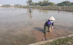 Chuẩn bị lấy nước gieo cấy vụ xuân, Thứ trưởng Bộ NNPTNT khuyến cáo gì?