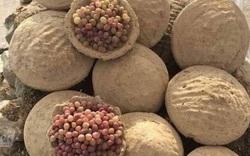 Học người Afghanistan bảo quản hoa quả tươi ngon suốt nửa năm
