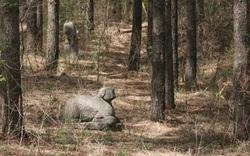 """Phát hiện mới nhất gây """"sững sờ"""" thế giới về khu rừng cổ bí ẩn với những ngôi mộ hiện đại"""