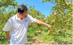 Đồng Nai: Nông dân nuôi ba ba, trồng mãng cầu để làm giàu