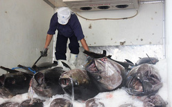 """Bình Định: Ngôi làng đặc biệt đàn ông chuyên câu cá ngừ """"khủng"""", sống ở biển nhiều hơn đất liền"""