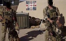 Hai chú chó đặc nhiệm được nhận huy chương sau khi cứu sống 12 binh sĩ Anh