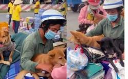 """Vụ tiêu hủy 15 con chó: """"Lãnh đạo địa phương thiếu bản lĩnh"""""""