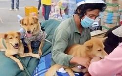 Từ vụ tiêu hủy 15 con chó của vợ chồng nghèo về Cà Mau tránh dịch: Có vi phạm quy định tiêu hủy vật nuôi?