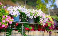 4 mẹo giúp cây cảnh xanh tươi, mang sự sống tràn trề cho gia đình bạn