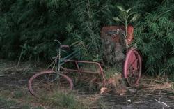 Cảnh tượng hoang tàn của thiên đường du lịch Bali do ảnh hưởng của Covid-19