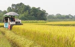 Bón phân Lâm Thao NPK-S khép kín, lúa mùa đạt hơn 2 tạ/sào