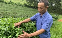 Nghệ An: Nông dân Việt Nam xuất sắc 2021 là một tỷ phú trồng chè xanh nức tiếng xứ Nghệ