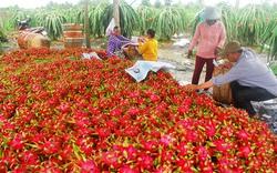 Vựa trái cây Nam Bộ chuẩn bị hàng cuối năm