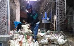 Giá gia cầm hôm nay 20/10: Giá vịt thịt, giá gà công nghiệp giảm từng ngày do giá lợn hơi giảm sâu?