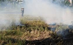 Bất ngờ: Thứ phụ phẩm sau mỗi mùa lúa bị đốt bỏ khói um cả làng, lên Amazon bán 100 USD/tấn