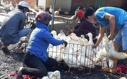 Giá gia cầm hôm nay 22/10: Giá gà, vịt có xu hướng giảm, cảnh báo dịch bệnh nguy hiểm gia tăng cuối năm
