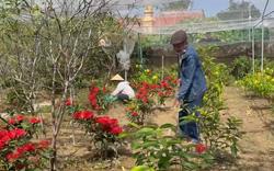 """Nghệ An: Sợ """"tắc"""" đầu ra, nông dân giảm diện tích hoa Tết"""