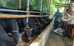 Quảng Nam: Quỹ Hỗ trợ nông dân toàn tỉnh đạt 114,7 tỷ đồng