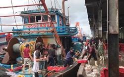 Ngư dân Khánh Hòa hối hả bán tháo hải sản tránh áp thấp
