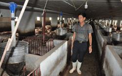 """Nông nghiệp giữ vững kỳ tích giữa đại dịch Covid-19 (bài 3): Heo, gà... ứ đọng đầy chuồng, trang trại, doanh nghiệp """"kêu cứu"""""""