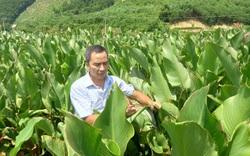 Nông thôn Tây Bắc: Nhiều cách giúp nông dân phát triển kinh tế ở Hoà Bình