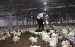Giá gia cầm hôm nay 9/10: Cập nhật giá gà, vịt mới nhất, chuyên gia dự báo giá gia cầm cuối năm