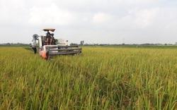 Nam Định: Năng suất lúa cao nhất 5 năm trở lại đây, nông dân phấn khởi