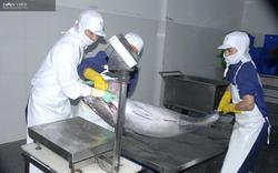 Bình Định: Vào chuỗi liên kết sản xuất, tiêu thụ cá ngừ đại dương, giá cá bán cao hơn 15.000 đồng/kg