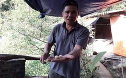 Thái Nguyên: Nuôi con ăn hè, ngủ đông, ông nông dân sắm xe hơi, xây nhà lầu