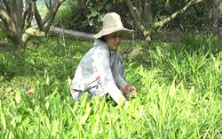 """Tiền Giang: Nuôi trồng kiểu """"thả vịt ra lùa"""", anh nông dân kiếm bộn tiền khiến nhiều """"Hai lúa"""" mơ ước"""