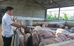 Giá lợn hơi tiếp tục giảm: Người nuôi lo phá sản, thua lỗ