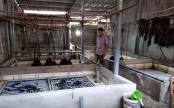 Phú Yên: Nuôi lươn không bùn dày đặc trong nhà, bắt đến đâu thương lái mua hết sạch