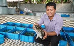 Nam Định: Bỏ lương công nhân về quê nghèo nuôi ba ba vài chục vạn con, 8X đổi đời, thu tiền tỷ mỗi năm