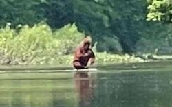 Video: Bất ngờ trước cảnh quái vật Bigfoot ôm con lội qua sông