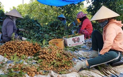 Tây Ninh: Dịch giã liên miên, trái cây đặc sản cũng ế ẩm, trái chín rục bán trầy bán trật